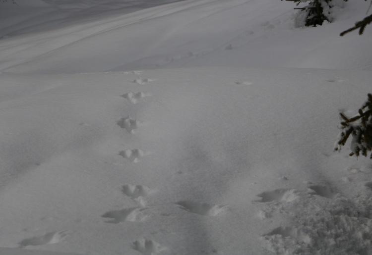Sur les traces des animaux   De Pralong aux Mayens de Méribé