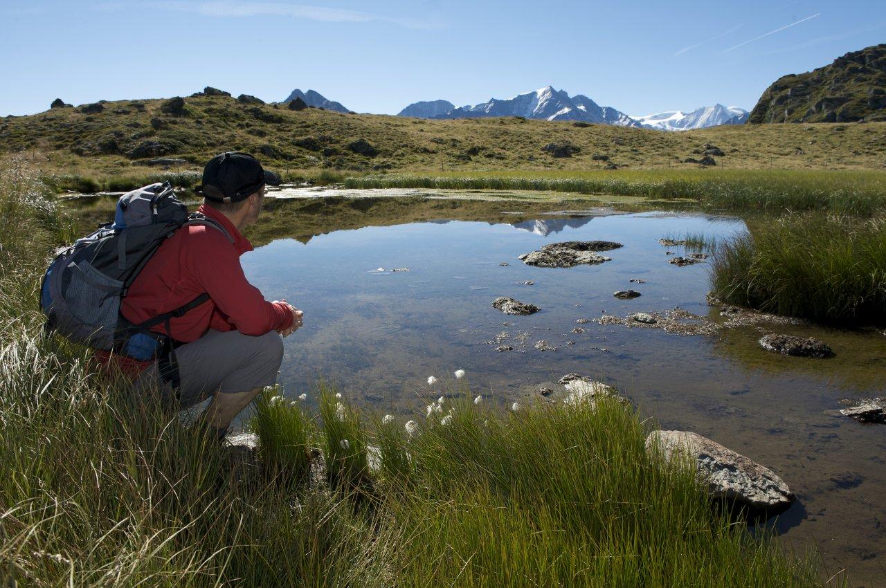 Randonnée thématique accompagnée à la découverte de la biodiversité du Val d'Hérens