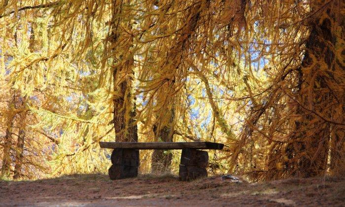 3 spots pour admirer les forêts de mélèzes