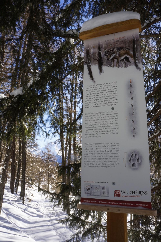 Sur les traces des animaux   Suen/Grangeneuve à Prarion